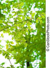 Los rayos del sol brillan en las hojas de los árboles con fondo verde