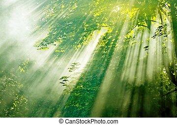 Los rayos del sol en el bosque