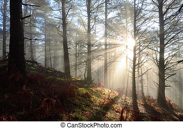 luces, bosque