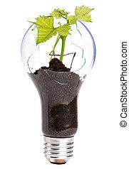 Luces con plantas creciendo dentro