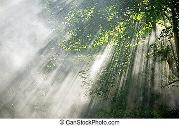 Luces solares en el bosque