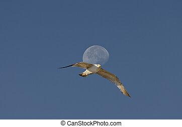 Luna al final del día