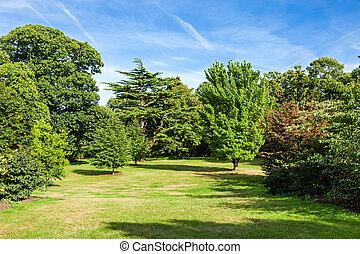 Lush verde hermoso jardín del parque Woodland