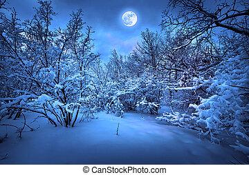 luz de la luna, madera, invierno, noche