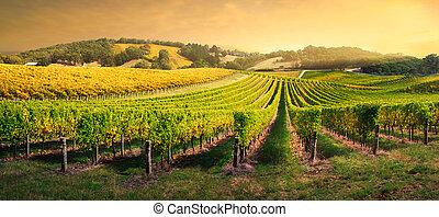 Luz de viñedo