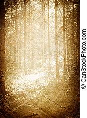 Luz del sol en el bosque, fondo cosechado con espacio para el texto.