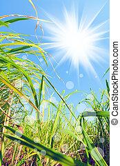 luz, malas hierbas, debajo