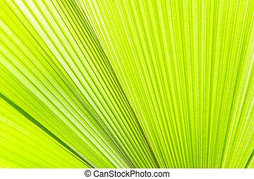 Luz solar en hojas de palma