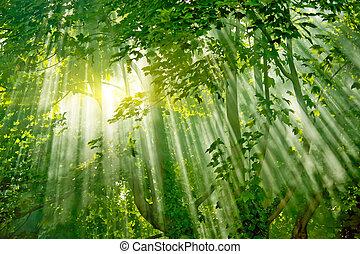 Luz solar mágica en el bosque