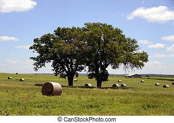 Lyndon BJohnson National Park