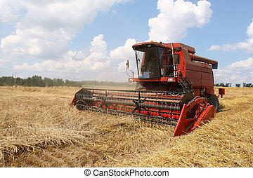 Máquinas cosechando maíz