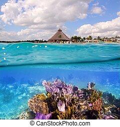 méxico, riviera, coral, maya, arrecife, cancun