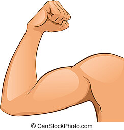 músculos, brazo, hombre