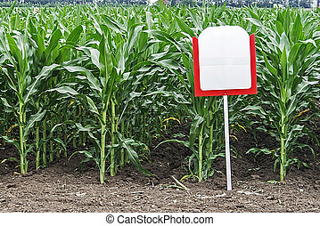 maíz, fértil