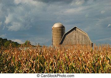 Maíz rural