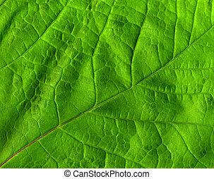 Macarrón de hojas verdes cerca.