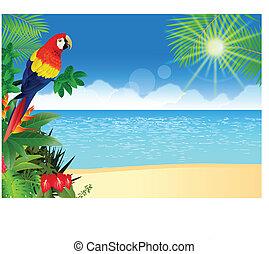 Macaw con backgroun de la playa tropical
