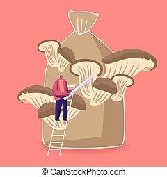 macho, bolsa, corte, sack., carácter, inmenso, caricatura, ilustración, arriba, aparejar, maduro, hongos, estante, ostra, manos, casero, diminuto, crecer, cuchillo, rey, fungiculture., vector, escalera