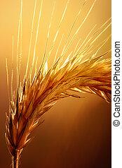 macro, trigo