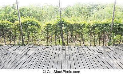 Madera en el suelo, fractura artificial y árbol verde