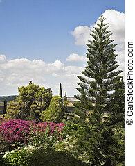 Magníficos árboles y arbustos florecientes