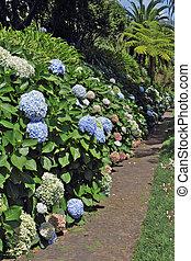 Magníficos arbustos florecientes a lo largo del sendero