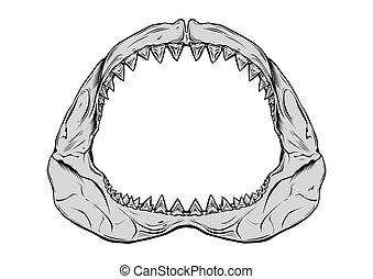 mandíbula, tiburón