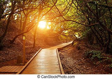 Mando de los sentidos, parque nacional de Anaga, tenife