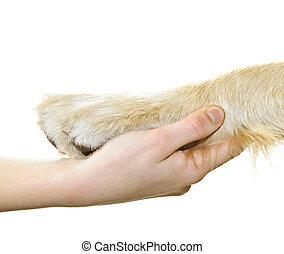 Mano humana sosteniendo pata de perro