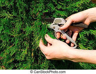 Manos cortando un arbusto