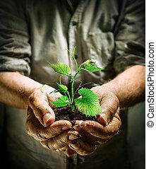 Manos de granjero sosteniendo una planta verde