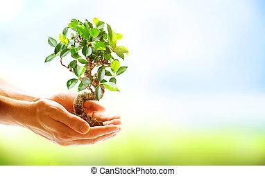 Manos humanas sosteniendo plantas verdes sobre la naturaleza