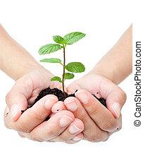 manos, planta