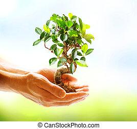 manos, tenencia, encima, plano de fondo, verde, humano, naturaleza, planta