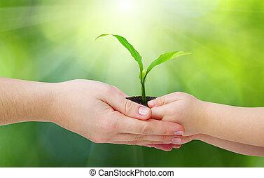 Manos y plantas