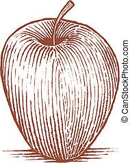 manzana, woodcut