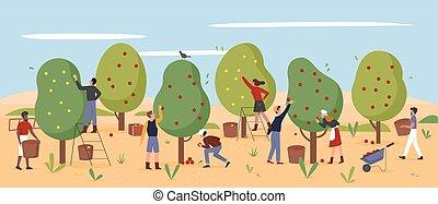 manzanas, granja, agricultura, trabajo, cosechar, granjeros, jardín, trabajadores, pico, gente, otoño