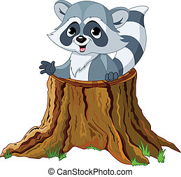 mapache, tocón, árbol