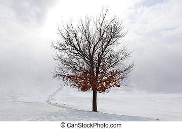 Maple árbol en la nieve