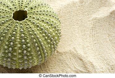mar de la arena, pilluelo