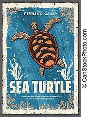 mar, escollos, tortuga, océano, coral