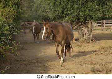 maravilloso, rancho, caballos, corral
