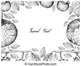 marco, mano, feroniella, fruits, dibujado, lucida, ébano