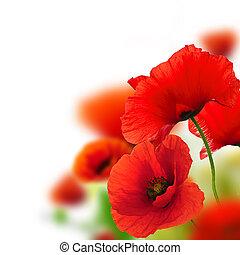 marco, plano de fondo, verde, amapolas, floral, blanco, diseño, rojo