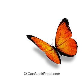 mariposa, aislado, plano de fondo, naranja, blanco