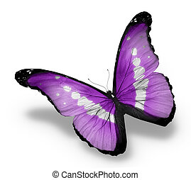 mariposa, aislado, plano de fondo, violeta, blanco, morpho