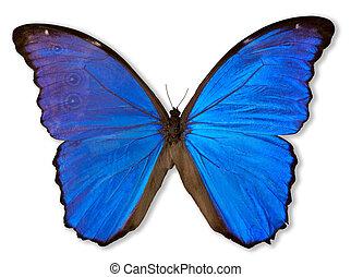 Mariposa azul (con camino)