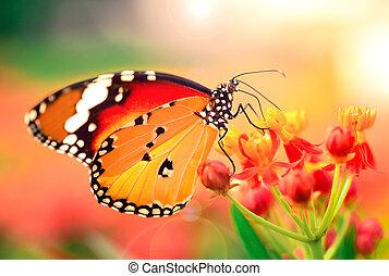 Mariposa en flor naranja en el jardín