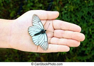 Mariposa en mano de niño