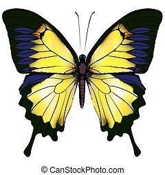 Mariposa. Ilustración aislada amarilla sobre fondo blanco